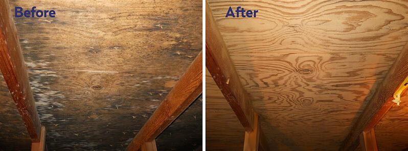 attic mold removal in Tacoma