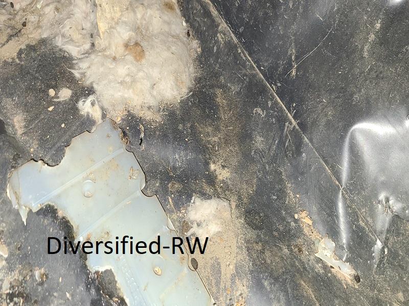 crawl space cleaning repair in Olympia, WA