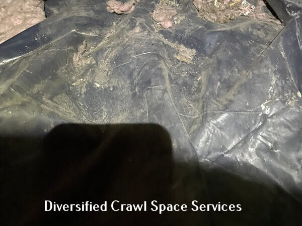 crawl space pest activity